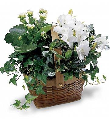 From The Garden Indoor Plants