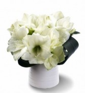 Frosty Amaryllis Clear glass cylinder vase