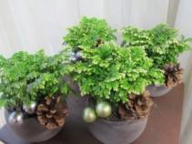 Frosty Ferns Plant Arrangement