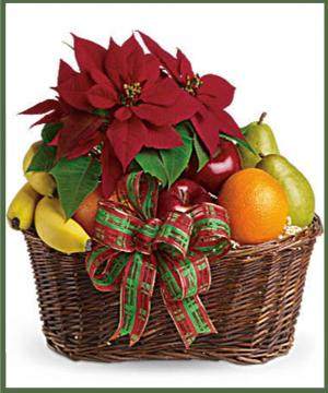 Fruit and Poinsettia Basket  in Arlington, TX   Erinn's Creations Florist