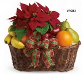 Fruit and Poinsettia Basket Gift Basket