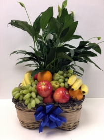 Fruit & Plant Basket Gift Basket for Any Occassion