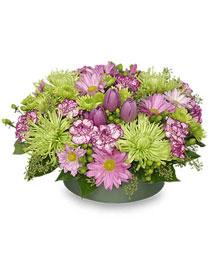 LAVENDER & LIME Flower Arrangement