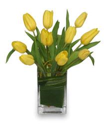 SUNNY TULIPS Floral Arrangement