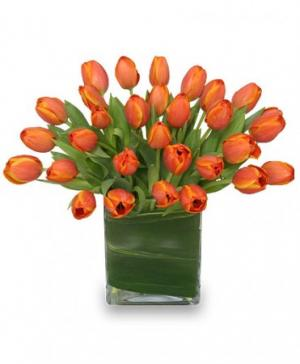 ORANGE OASIS Bouquet of Tulips in Amelia Island, FL | ISLAND FLOWER & GARDEN
