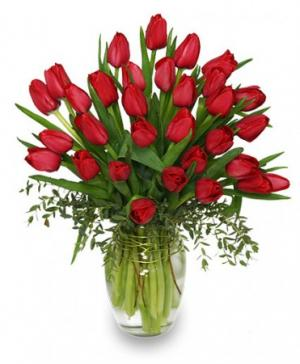 CHERRY RED TULIPS Bouquet in Chatham, NJ | SUNNYWOODS FLORIST