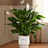 FTD Comfort Planter Green Plant
