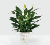 Ftd exclusive peaceful planter