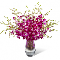 FTD Pink at Heart  Orchid Bouquet