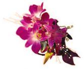 FUCHSIA ORCHIDS  WRIST CORSAGE