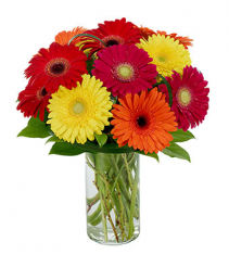full of gerberas special occasion