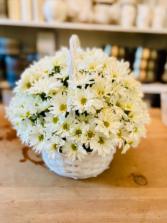 Fun daisy's happy day  White daisy