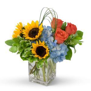 Fun in the Sun  in Zanesville, OH | FLORAFINO FLOWER MARKET & GREENHOUSES