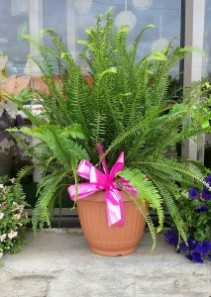 FUN WITH FERNS! KIMBERLY FERN