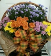 Funeral or Occasion Basket of  Assorted Mums