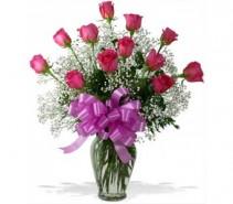 Fushia Roses
