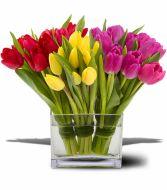 Gangs of Tulips