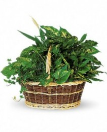 GARDEN BASKET Assortment of green plants
