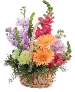 Garden Basket basket arrangement in North Adams, MA | MOUNT WILLIAMS GREENHOUSES INC