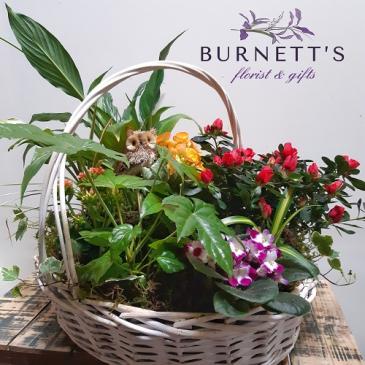 Garden Basket Deluxe Plant