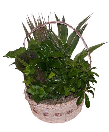 Garden Basket dish garden