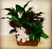 Garden Basket Duo Plants