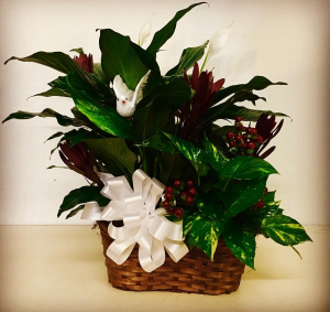 Garden Basket Duo Plants in Plainview, TX | Kan Del's Floral, Candles & Gifts
