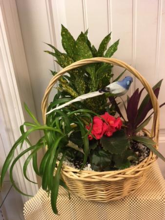 Garden Basket Garden Plants