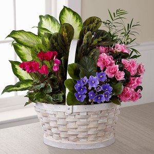 Garden Basket mixed blooming and green plants in Northport, NY | Hengstenberg's Florist