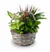 Garden Basket Mixed green and flowering plants
