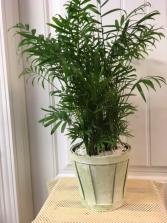 Garden Basket Plant