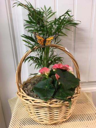 Garden Basket plants