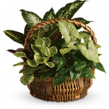 Garden Basket  Live Plants