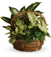 Garden Basket EN-8P