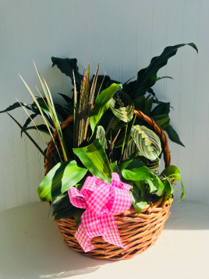 Garden Basket with Bow  in Sedalia, MO | State Fair Floral