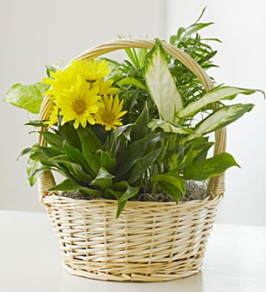 Garden Basket with Fresh Cut Flowers For More Info Call: (805)653-6929 in Ventura, CA | Mom And Pop Flower Shop