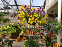 Hanging Garden Baskets