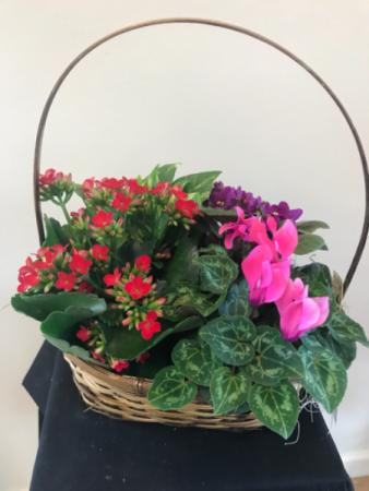 Planter garden blooming