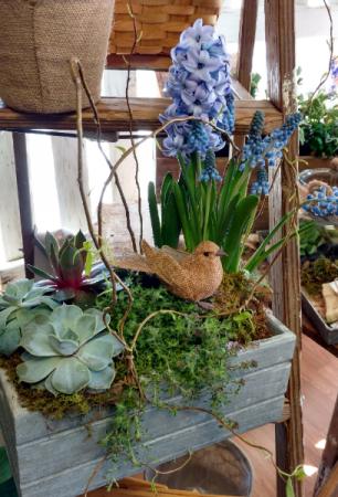 Garden Box  Home