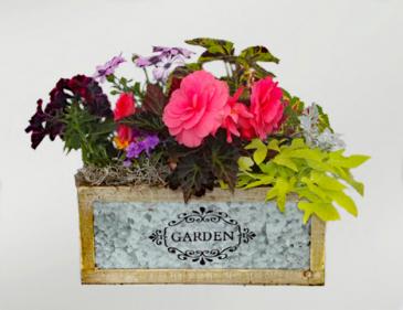 Garden Box Variety of annual plants