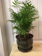Garden Dish Plant