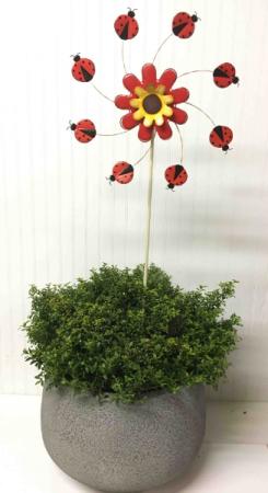 Garden Gift