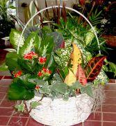 Garden In A Basket Euro Garden