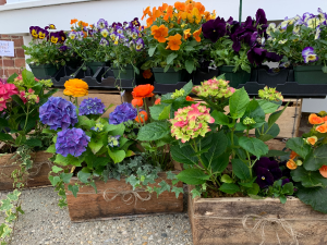 Happiness in a Garden  Box Outdoor Planter Box in Northport, NY | Hengstenberg's Florist