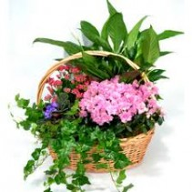 Garden In Bloom Basket Plant Basket