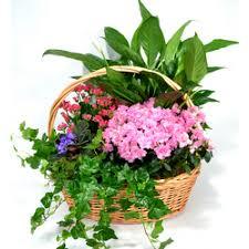 Garden In Bloom Basket Plant Basket