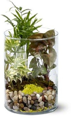 Garden in Glass Plants For Him in Burbank, CA | MY BELLA FLOWER