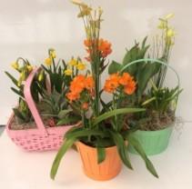 Garden of Bulb Plants