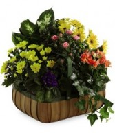 Garden of Gifts Plant Basket