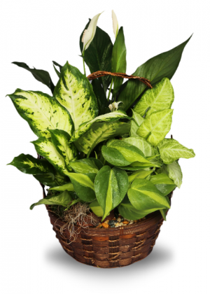 Garden Plant Basket  in Sunrise, FL | FLORIST24HRS.COM